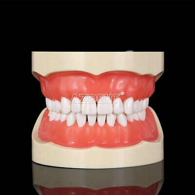 Kilgore NISSIN 200 Type Teeth Dental Typodont Teeth Model With Removable Teeth 9