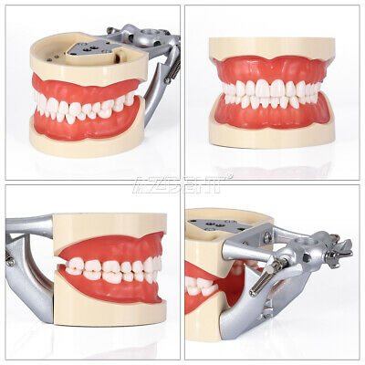 Kilgore NISSIN 200 Type Teeth Dental Typodont Teeth Model With Removable Teeth 4
