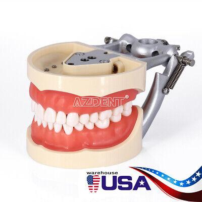 Kilgore NISSIN 200 Type Teeth Dental Typodont Teeth Model With Removable Teeth 2