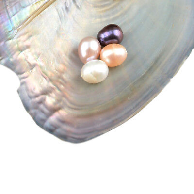 15/25/35PCS Individually Wrapped Oysters with Pearl for Necklace Random Color 5