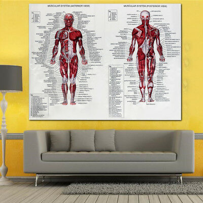 Human Body Muscle Anatomy System Poster Anatomical Chart Educational Poster 3