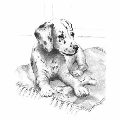 Animals Sketching Made Easy Drawing Kits & Graphite Pencils Set 9
