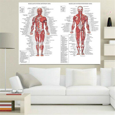 70X50CM Human Body Muscle Anatomy System Anatomical Chart Educational Poster 4