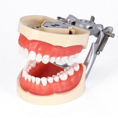 Kilgore NISSIN 200 Type Teeth Dental Typodont Teeth Model With Removable Teeth 3