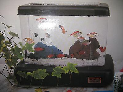 Aquarium als Dekoration und für Echte Fische Breite32cm mit 8 Stück Dekofische 2
