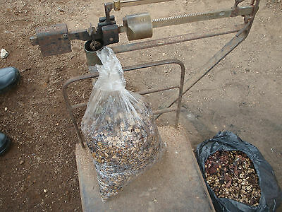 Direct From Grower. Mandailing Estate Wild Jungle Grown Kopi Luwak 50 Grams.