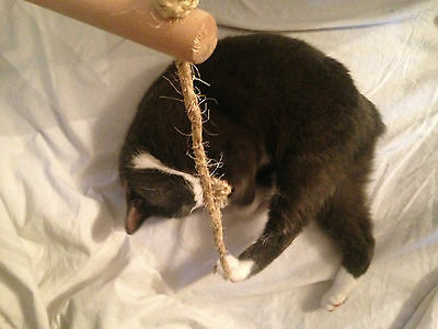 Rope and stick cat toy with catnip 2