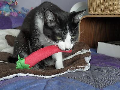 100% Catnip Filled Cat Kitten Toys 4