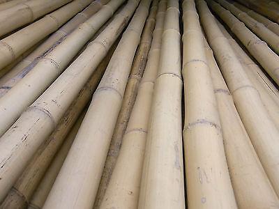 Bambusrohr Bambusstange Bambushalm Bambus Paketpreis 10 x 3-4 cm x 2 m
