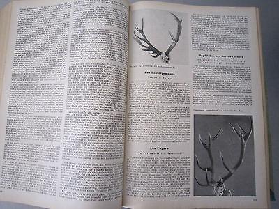 """""""Wild und Hund"""" kompletter 60. Jahrgang von April 1957 - März 1958,Hege,Pirsch 4"""