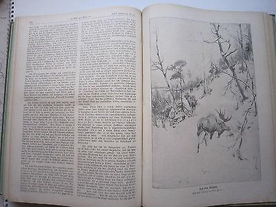 """""""Wild und Hund""""  25. Jahrgang Januar - Dezember 1919, Hege,Pirsch 6"""