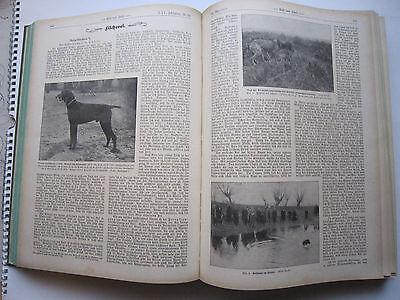 """""""Wild und Hund""""  25. Jahrgang Januar - Dezember 1919, Hege,Pirsch 7"""