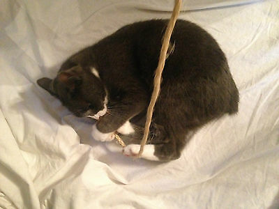 Rope and stick cat toy with catnip 4