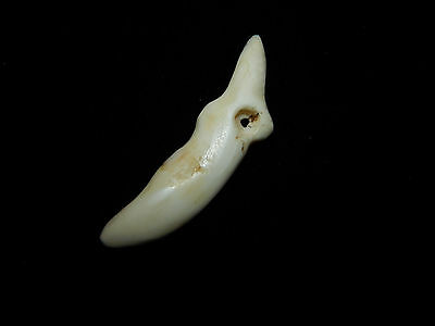 Pre-Columbian Avian Pendant Bead, Shell Pendant, Costa Rica, Authentic 5