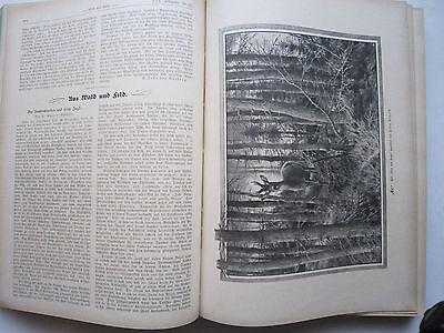 """""""Wild und Hund""""  25. Jahrgang Januar - Dezember 1919, Hege,Pirsch 5"""
