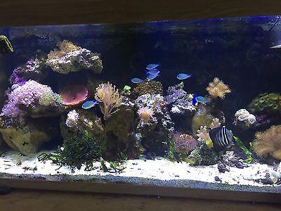 Marine not HERMIT Crab Shells marine and fresh water 9