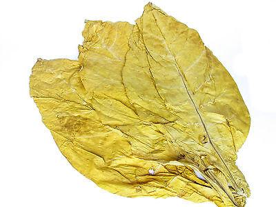 Virginia und Burley 50/50 Mischung Rohtabak Duft & Deko Blätter 3