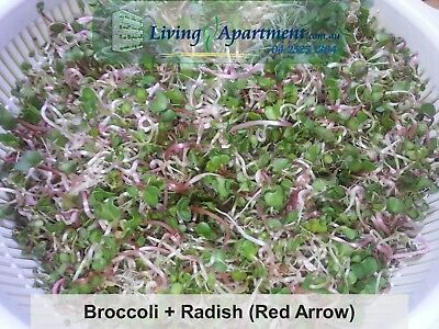 Broccoli Sprout seeds Organic Certified ( Sprouts , Sprouting seeds )