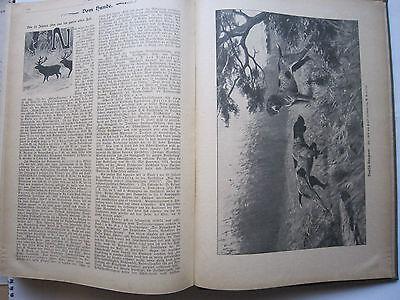 """""""Wild und Hund""""  25. Jahrgang Januar - Dezember 1919, Hege,Pirsch 10"""