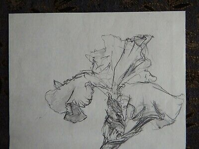 Original Pencil realist expressive line flower drawing of a single iris on paper 3