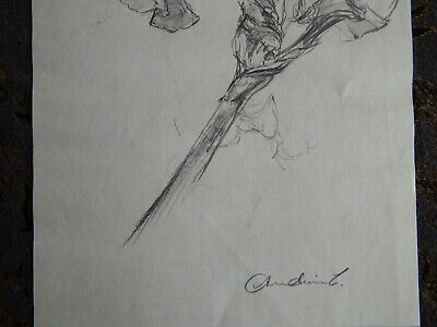 Original Pencil realist expressive line flower drawing of a single iris on paper 7
