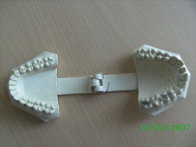 Antikes Kiefermodell Gebissmodell Frasaco etwa 1960 - 1970 3