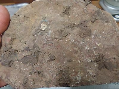 Australian fossil mineral specimen collection lapidary rough - HL103