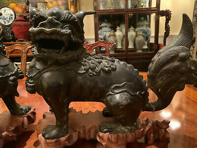 A Pair Large and Rare Chinese Ming Dynasty Bronze Foolions with Rosewood Stands. 6