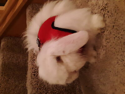 Large Black/Red Adjustable Soft Harness with Elastic Leash for Rabbit Bunny 10