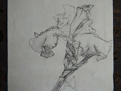 Original Pencil realist expressive line flower drawing of a single iris on paper 4