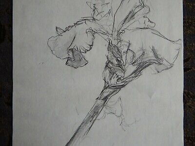 Original Pencil realist expressive line flower drawing of a single iris on paper 5
