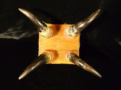 Rare Antique American Western Cowboy Steer Cow Horn Footstool - Circa 1880 6 • £385.11