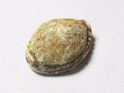 Zurqieh -Cy23- Ancient Egypt , Stone Scarab (1782 B.c- 1570 B.c.) . Perfect 2