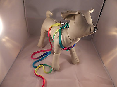 Harness & Lead Set Bright Neon Coloured for Small Dog or Cat  DCO 09 3