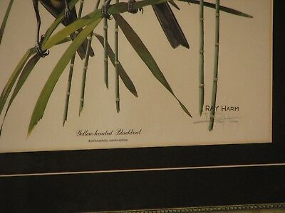 Vintage Ray Harm Yellow-Headed Blackbird Signed Framed Print, Plate XLIII 3