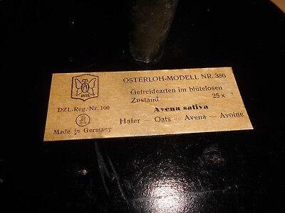 Altes Osterloh Modell Nr. 386, Hafer, Getreidearten im blütenlosen Zustand, gebr