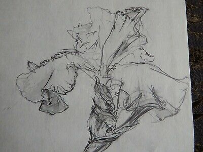Original Pencil realist expressive line flower drawing of a single iris on paper 11