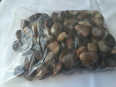 Large Black 50 lb 50Lb Decorative Polished Pebbles//River Rocks//Aquarium Gravel