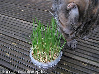 Complete cat grass grow kit - edible grass seed mix (oat, wheat, barley & rye) 5