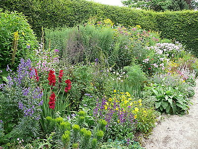 5X Mixed Established Garden Shrubs - Quality Potted Plants - Colourful Border 4