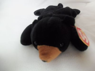 "TY Beanie Babies 8"" Black Bear ** BLACKIE **  5th Gen New w/ Tag"