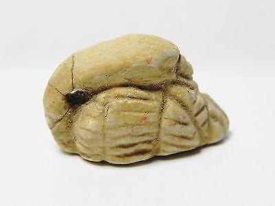 Zurqieh -Af131- Ancient Egypt ,  Stone Duck Amulet. 600 - 300 B.c 2