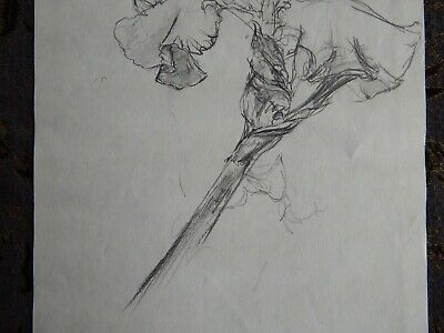 Original Pencil realist expressive line flower drawing of a single iris on paper 6