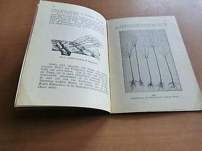Saftenberg Lehrmeister Bibliothek 116 Pflanzen Pflege Obstbäume Propfen Sorten