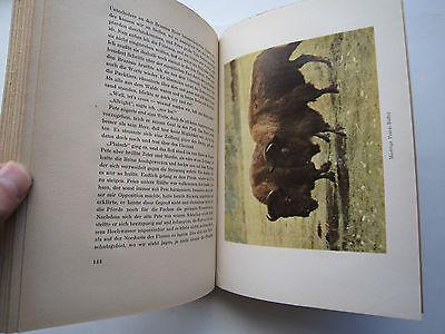"""""""Auf Bergwild in den Rocky Mountains""""Jagderlebnisse von Messany,1941 8"""