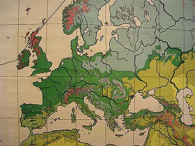 Schulwandkarte schöne alte Weltkarte Vegetation 213x127cm vintage world map 1954 3