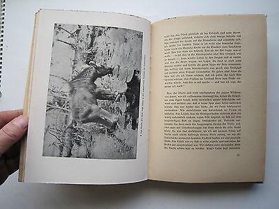 """""""Auf Bergwild in den Rocky Mountains""""Jagderlebnisse von Messany,1941 5"""