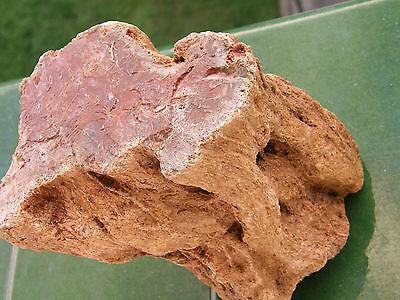 """Fosiles Holf """" Extraordinaria Madera Petrificada De Madagascar  -  10A14   """" 4"""