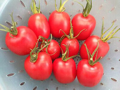 """Tomatensamen /""""De Berao/"""" *Riese Tomatenbaum*ORANGE 20 frische Samen"""