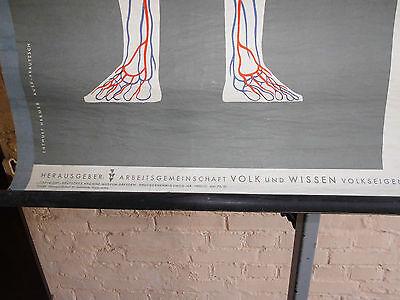 1 x Blutkreislauf /alte Lehrtafel (1472), gebr.Logo Deut. Hyg. Mus. Dresden usw.